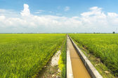 Water drain for paddy farm — Stock Photo