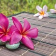 Plumeria — Stock Photo
