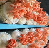 Colorful mushroom — Stock Photo