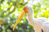 Flamingo bird — Stock Photo