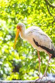 Фламинго птица — Стоковое фото