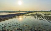 Irrigation water — Stock Photo