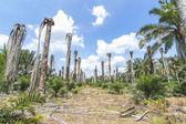 подсадка пальмового масла — Стоковое фото