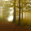 Autumn forest with fog — Stock Photo