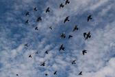 鳥が飛んで — ストック写真