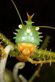 Portrait of a grasshopper — Stock Photo