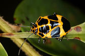 Bug crawling on a leaf — Stock Photo
