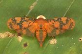 Cicada — ストック写真