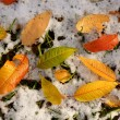 Royalty-Free Stock Photo: Fallen leaves on snow