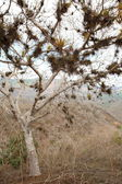 Dry forest on the coast in Ecuador — Stock Photo