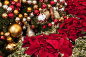 Christmas Tree and POINSETTIA — Stock Photo