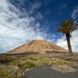 Volcano-agricultural landscape of the Lanzarote — Stock Photo