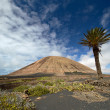 Volcano-agricultural landscape of the Lanzarote — Stock Photo #15028353
