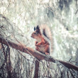 Squirrel on the pine branch — Stock Photo #47555557