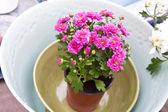 Em um pote de flores — Fotografia Stock