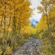 The Road Through the golden Aspens to the Clouds — Stock Photo