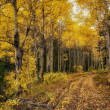 Road Through the Golden Aspens - Stock Photo