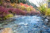 All the Colors of Autumn on the River — Stock Photo