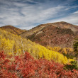 Stock Photo: Reds, Greens, Yellows of Autumn Landscape