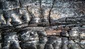 Close Up of Burned Log — Stock Photo