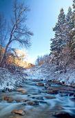 Watersdawn lechosa en el agua icey — Foto de Stock