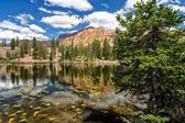 The Pine by Butterfly Lake — Stock Photo