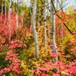 Autumn Rainbo — Stock Photo
