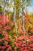 Autumn Rainbo — Stock Photo