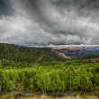 Stock Photo: Green Aspens on Boulder Mountain