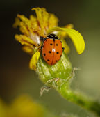 Señora bug con k — Foto de Stock