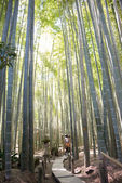"KAMAKURA, JAPAN - MARCH 22 2014: Tourists at Hokokuji Temple. It is an old temple in the  Rinzai sect of Zen Buddhism. Famous for its bamboo garden, it is also known as ""Bamboo Temple"". — Стоковое фото"