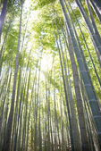 """KAMAKURA, JAPAN - MARCH 22 2014: Hokokuji Temple. It is an old temple in the  Rinzai sect of Zen Buddhism. Famous for its bamboo garden, it is also known as """"Bamboo Temple"""". — Stock Photo"""