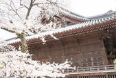 TOKYO, JAPAN - APRIL 1 2014: Kaneiji Temple on April 1, 2014.Kaneiji Temple is founded in 1625 during the Kanei era by Tenkai. It was destroyed during the Boshin War. — Stock Photo