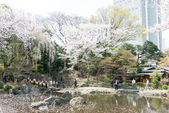 TOKYO, JAPAN - APRIL 2 2014: Japanese garden at Yasukuni Shrine, Tokyo, Japan. The Shrine established in the second year of the Meiji era (1869). — Stock Photo