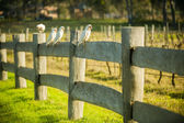 Cockatoo on a fence — Stock Photo