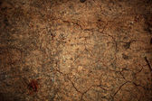 Beautiful grunge background - cracked ground. — Stock Photo