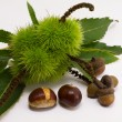 Chestnuts and acorns — Stock Photo