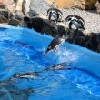 Jumping Penguins — Foto Stock