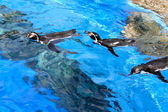 Floating penguins — Foto Stock