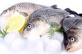 Fresh fish carp on a white background and ice and lemon — Stock Photo