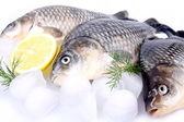Fresh fish carp on a white background and ice and lemon — Fotografia Stock