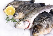 Fresh fish on white background with ice and lemon — Foto Stock
