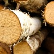 Stock Photo: Core is sawn birch, as background