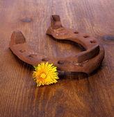 Old horseshoe with dandelion on wood background — Stock Photo