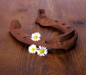 Old horseshoe with three camomile at wooden background — Stockfoto