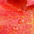 Red and yellow maple leaves with water drops — Stock Photo