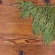 Thuja branch on wood background — Stock Photo