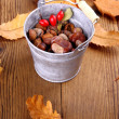 Zinc bucket full of chestnut, acorn and rosehip — Stock Photo