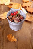 Zinc bucket full of chestnut, acorn and rosehip — Stock Photo