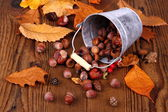 Zinc bucket with distributed acorn, chestnut and rosehip — Stock Photo
